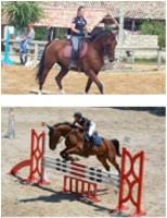 cours d'équitation en Hérault au centre équestre Gignac