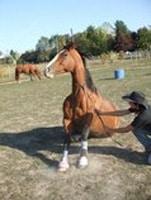 cours d'équitation centre équestre gignac