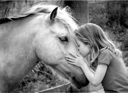 100% Equestre
