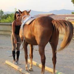 récompenser son cheval