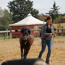 spectacle à poney