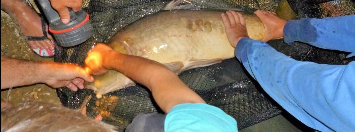 Soirée enfant Pêche Hérault