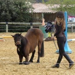 spectacle poney